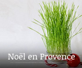 Christmas in Provence: Saint Barbara's day wheat